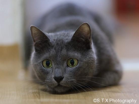 俄罗斯蓝猫、飘在思密达