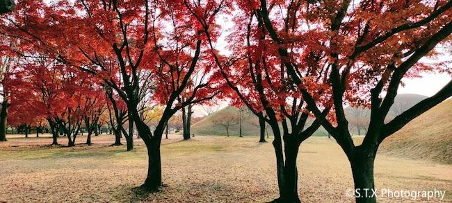 庆州大陵苑