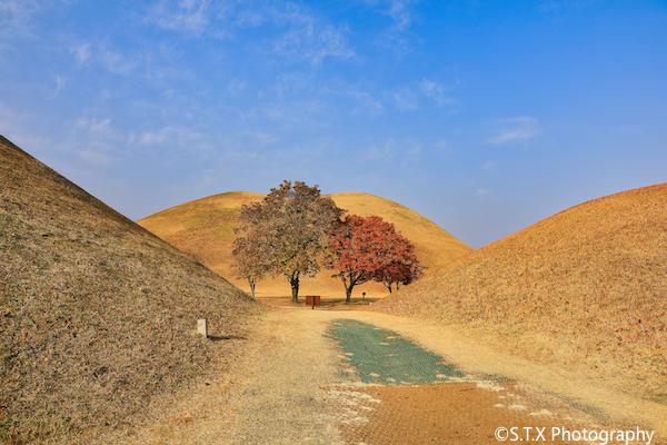佳能5D4庆州旅拍