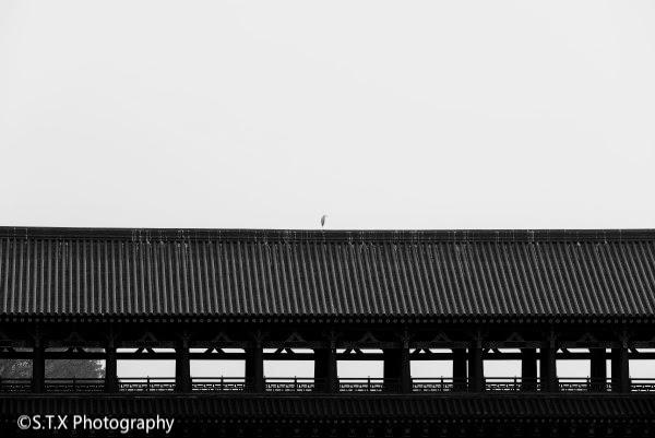 佳能5D4、黑白摄影作品