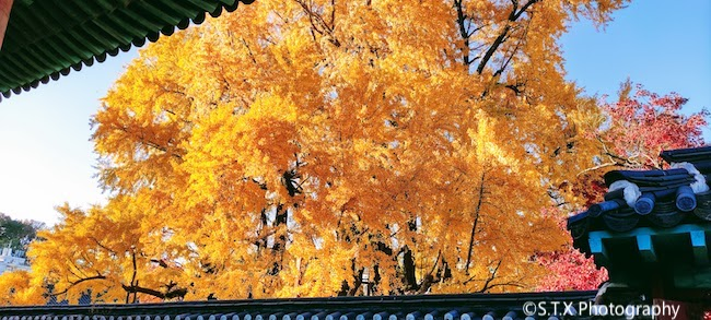 手机摄影作品、首尔的秋天