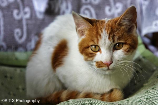 飘在思密达猫咪写真