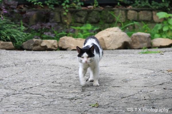 飘在思密达与流浪猫