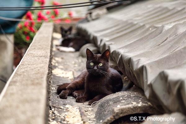 飘在思密达街拍小动物系列
