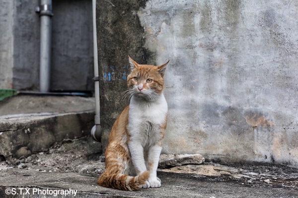 流浪猫、飘在思密达