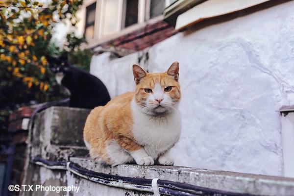 飘在思密达、流浪猫